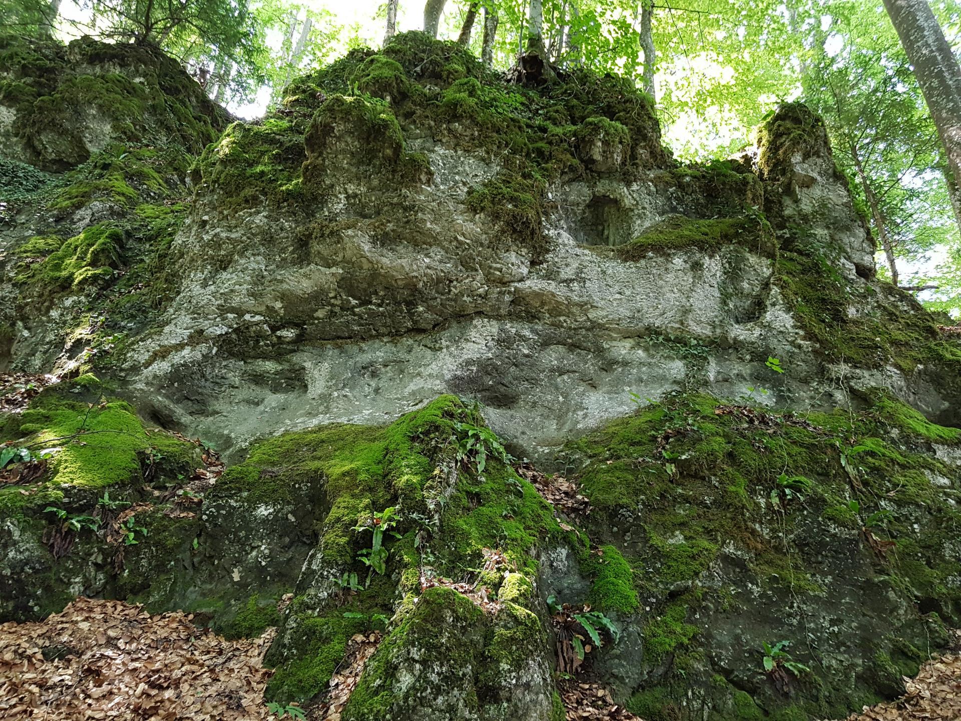 скалы биосферный заповедник закарпатье