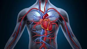 Воздействие бани на сердце