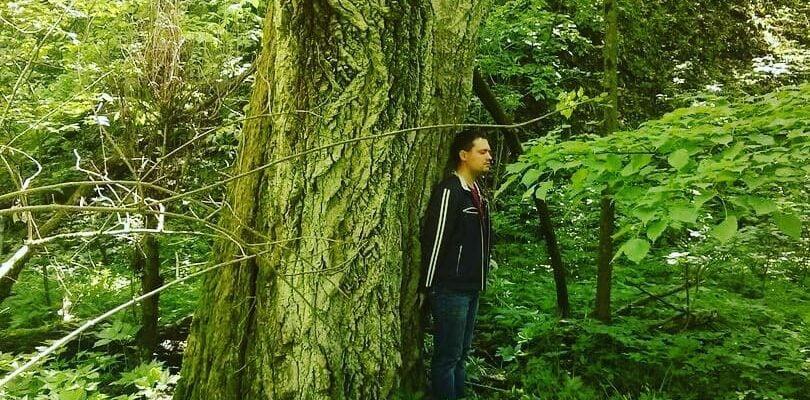 Взаимодействие с деревом