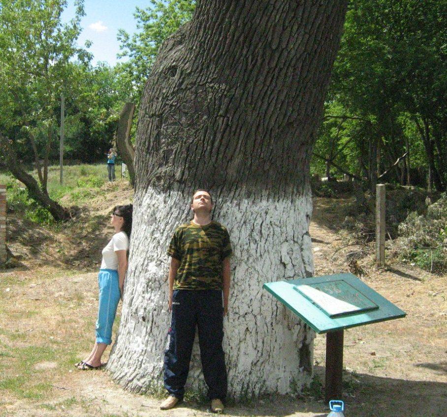 Как отыскать свое дерево