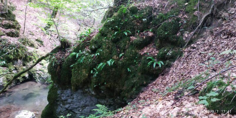 биосферный карпатский заповедник