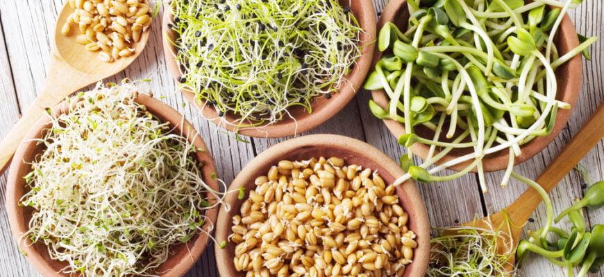 проростки семян